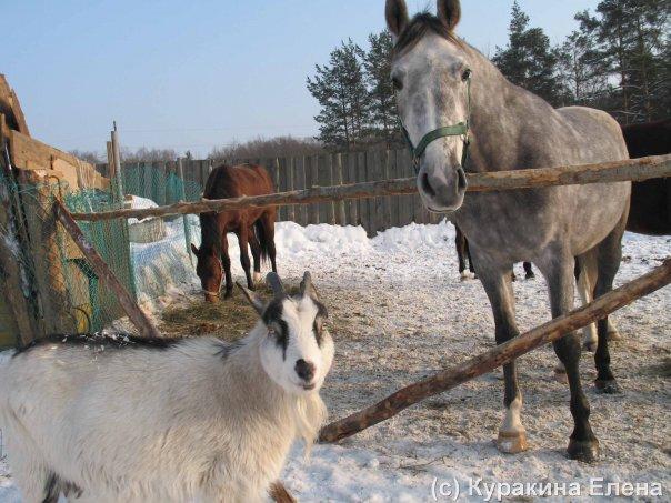 В Токсово открылся приют для собак, коров и кур - Росбалт
